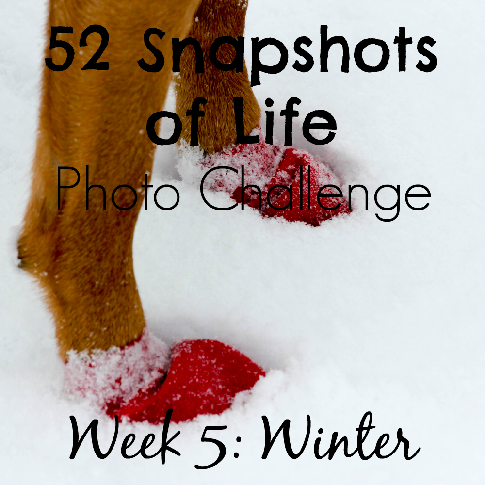 52 Snapshots of Life: - Photo Challenge - Week 5: Winter