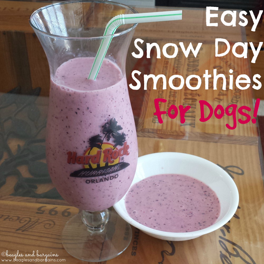 Easy Snow Day Smoothies for Dogs (and Humans)!