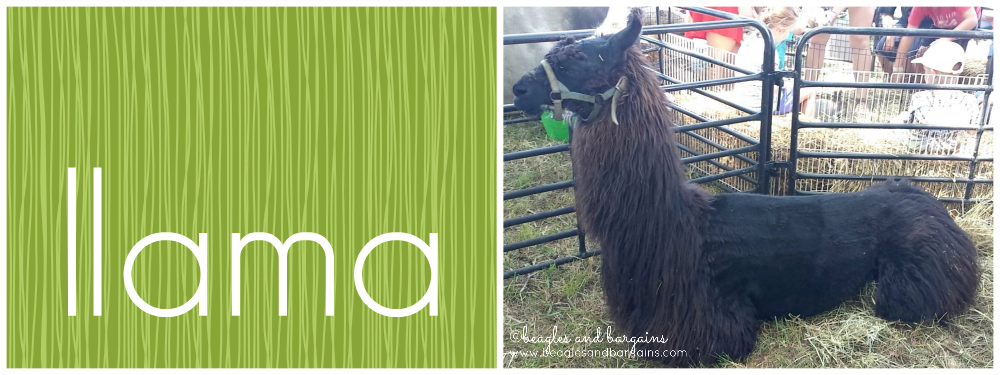 I Liked Llamas Before Llamas Were Cool - The word llama looks like one laying down!