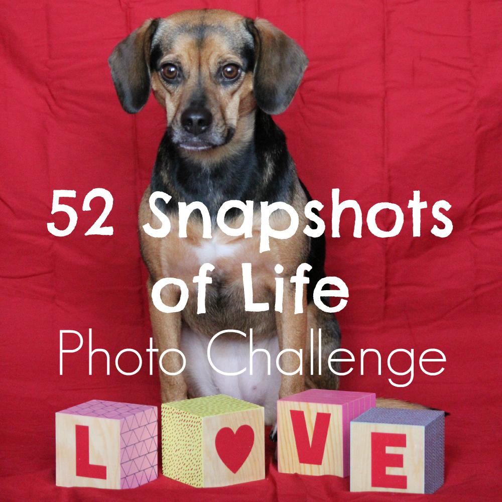 52 Snapshots of Life - Photo Challenge - Week 7: LOVE