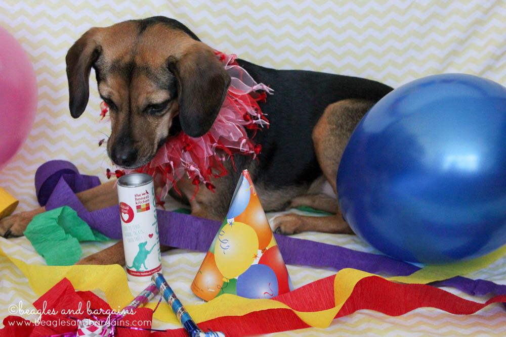 Beagles and Bargains' Blogiversary and Birthday Celebration Giveaway - The Honest Kitchen Quickies