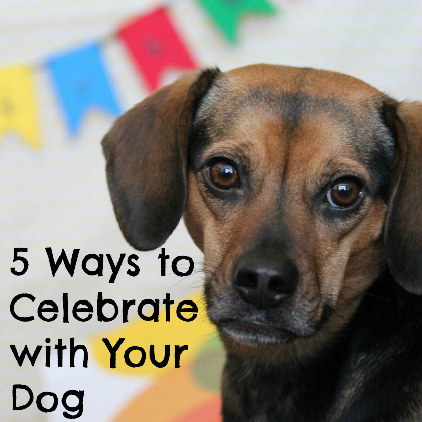 5 Ways to Celebrate with Your Dog