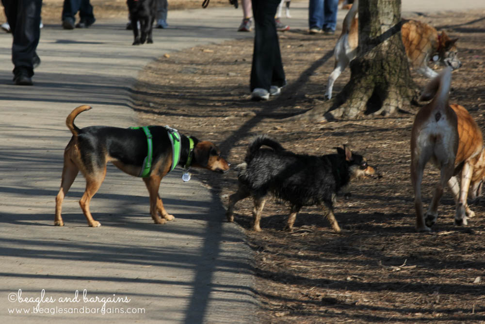 Luna meets a new dog at Shirlington Dog Park