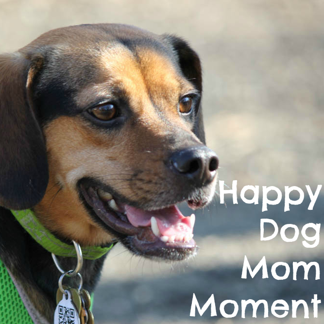 Happy Dog Mom Moment