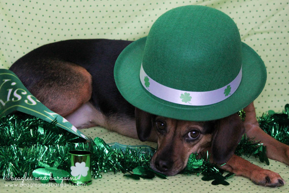 52 Snapshots of Life: GREEN - Luna goes green for St. Patrick's Day