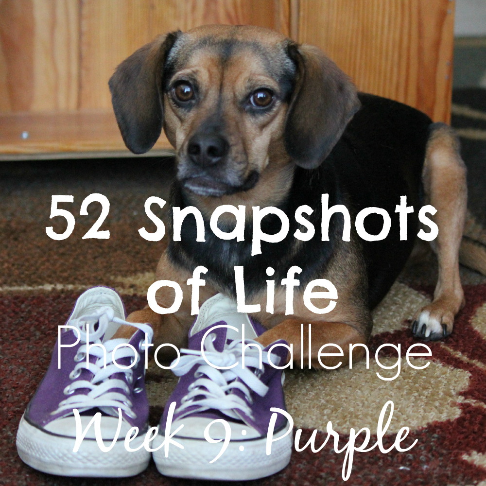 52 Snapshots of Life - Photo Challenge - Week 9: PURPLE