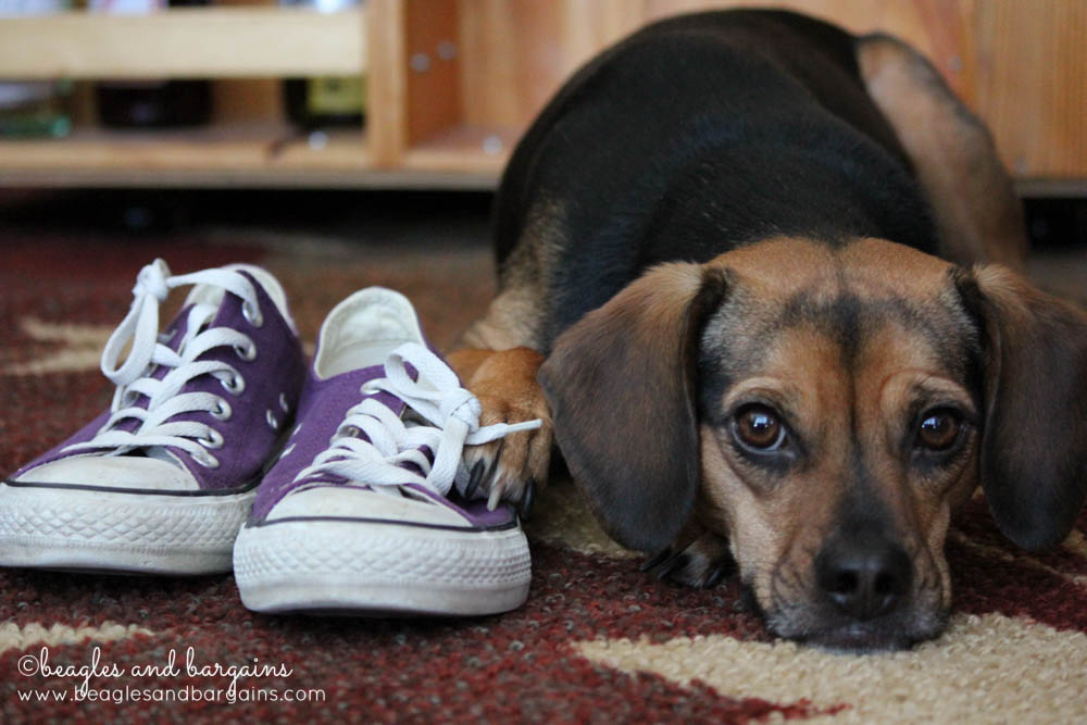 52 Snapshots of Life: PURPLE - Luna with purple shoes