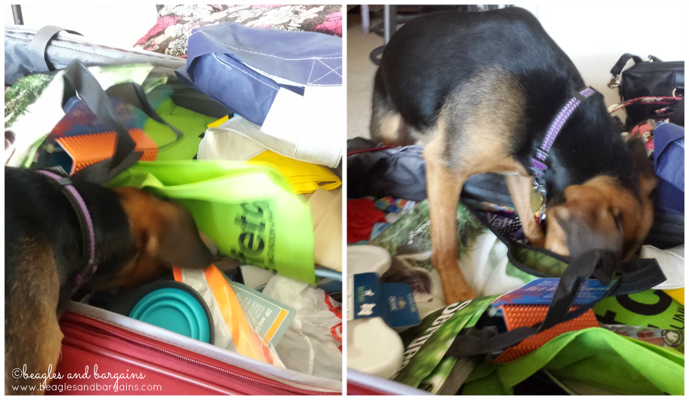 Luna is excited to try new pet products from Global Pet Expo