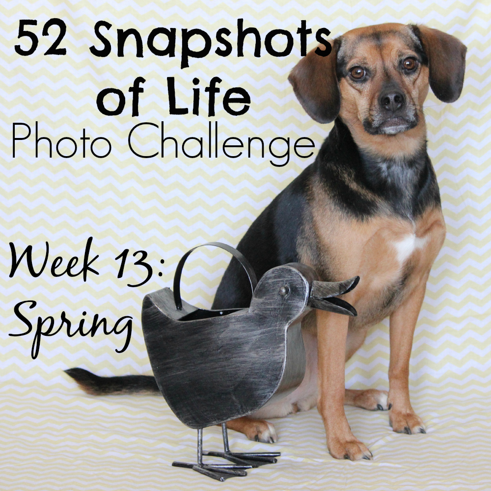 52 Snapshots of Life - Photo Challenge - Week 13: SPRING