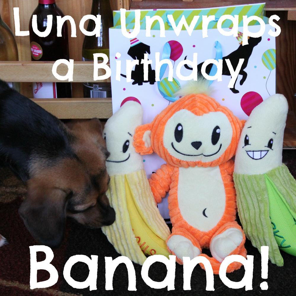 Luna Unwraps A Birthday Banana