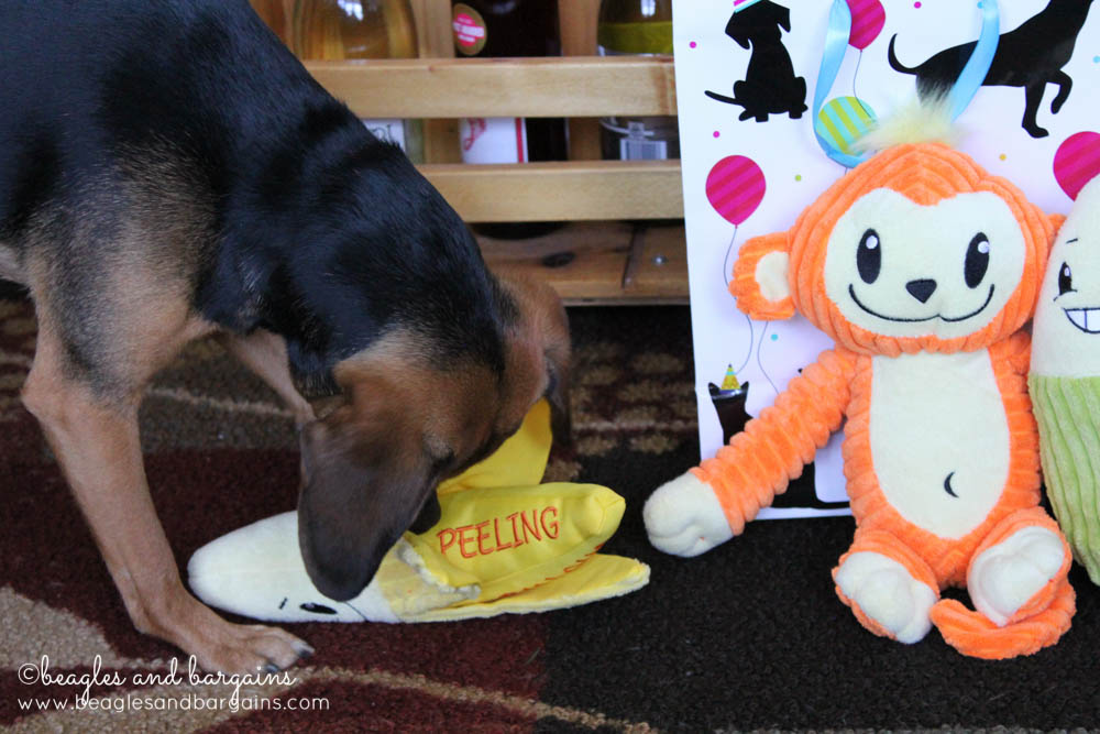 Luna plays with her new birthday toys - a banana!
