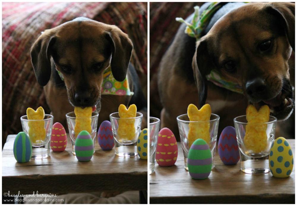 Luna enjoys her Egg Scramble - DIY Easter Brunch for Dogs