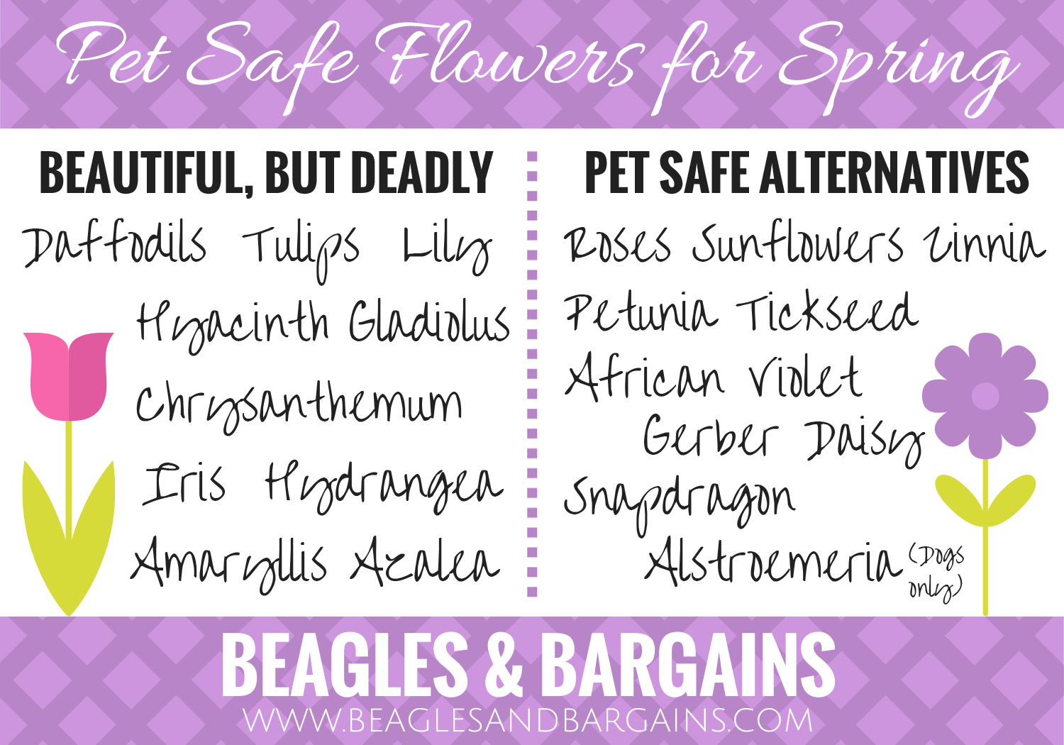 Pet Safe Flowers for Spring
