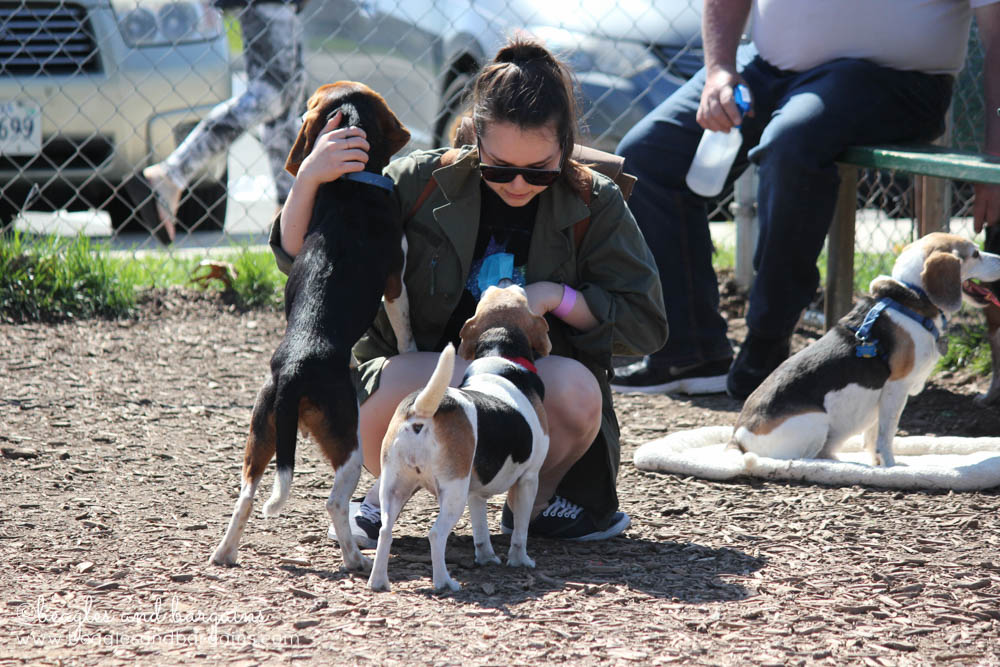 Tons of puppy love at BREW's Beaglefest