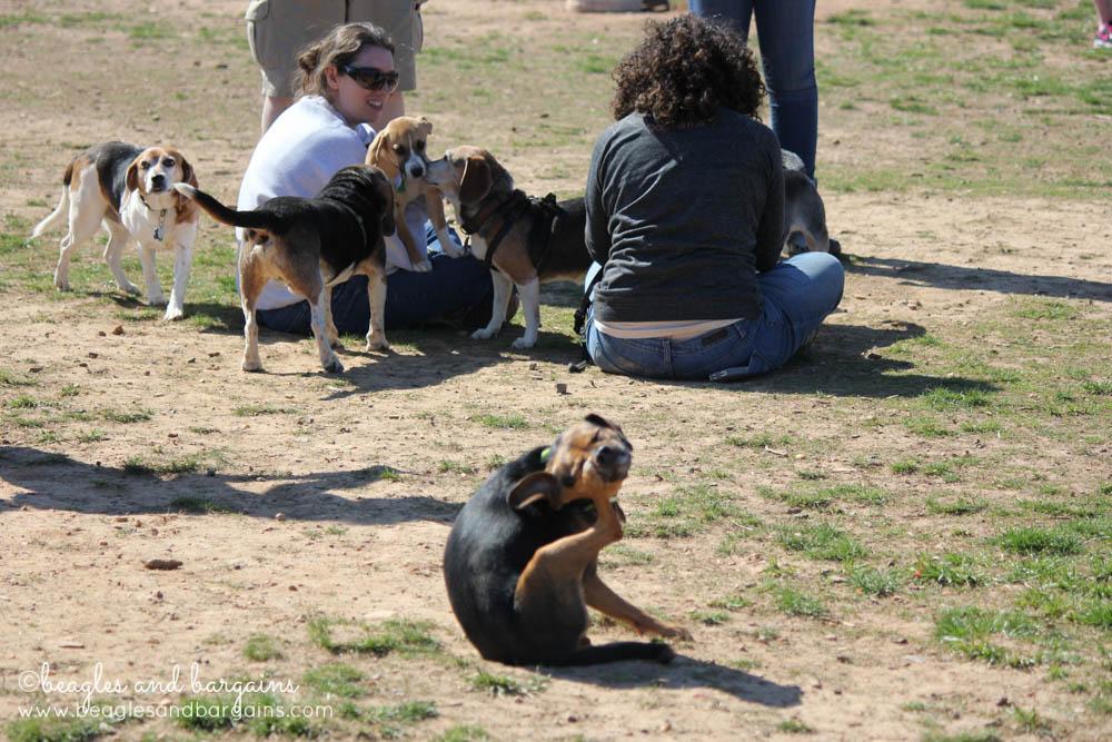 Awkward Luna at BREW's Beaglefest