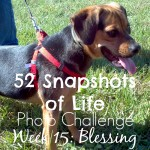 Open Your Heart to Pet Adoption. Blessings in Disguise.