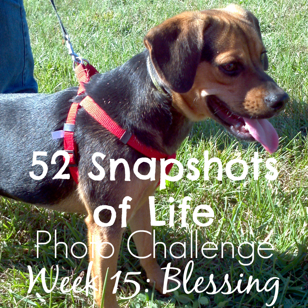52 Snapshots of Life - Photo Challenge - Week 15: BLESSINGS