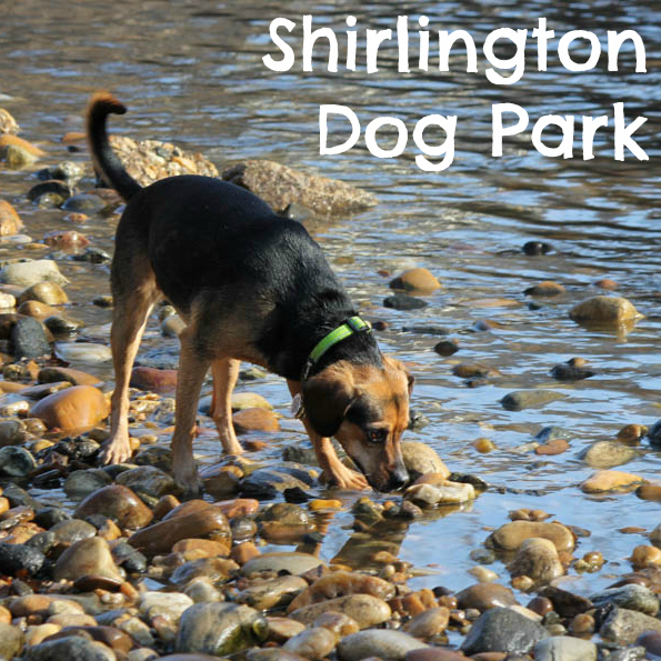 Shirlington Dog Park