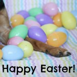 Happy Easter from Beagles & Bargains!