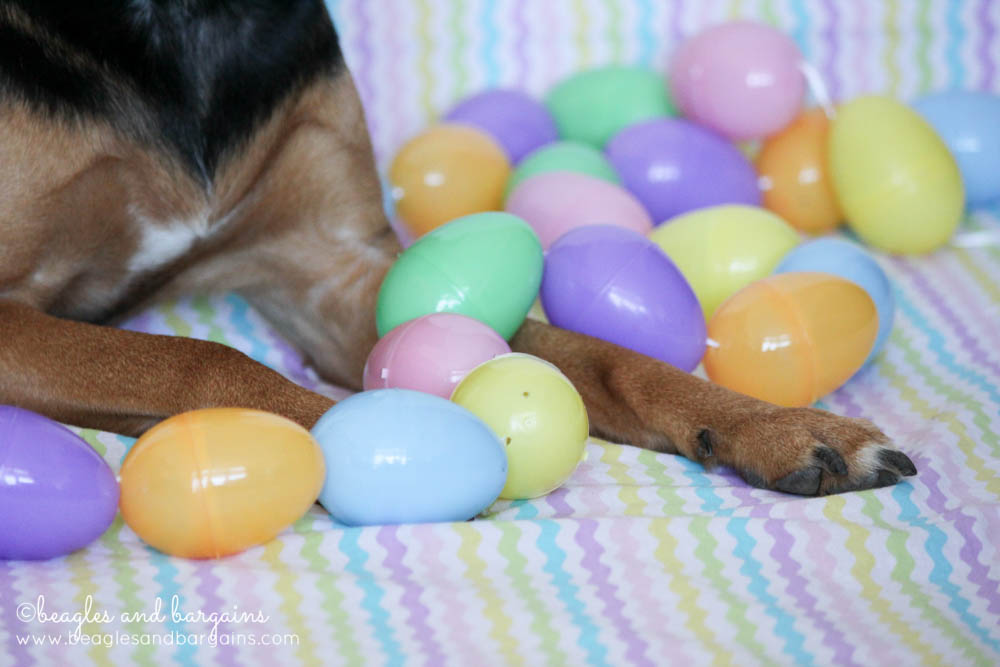 Happy Easter from Beagles & Bargains