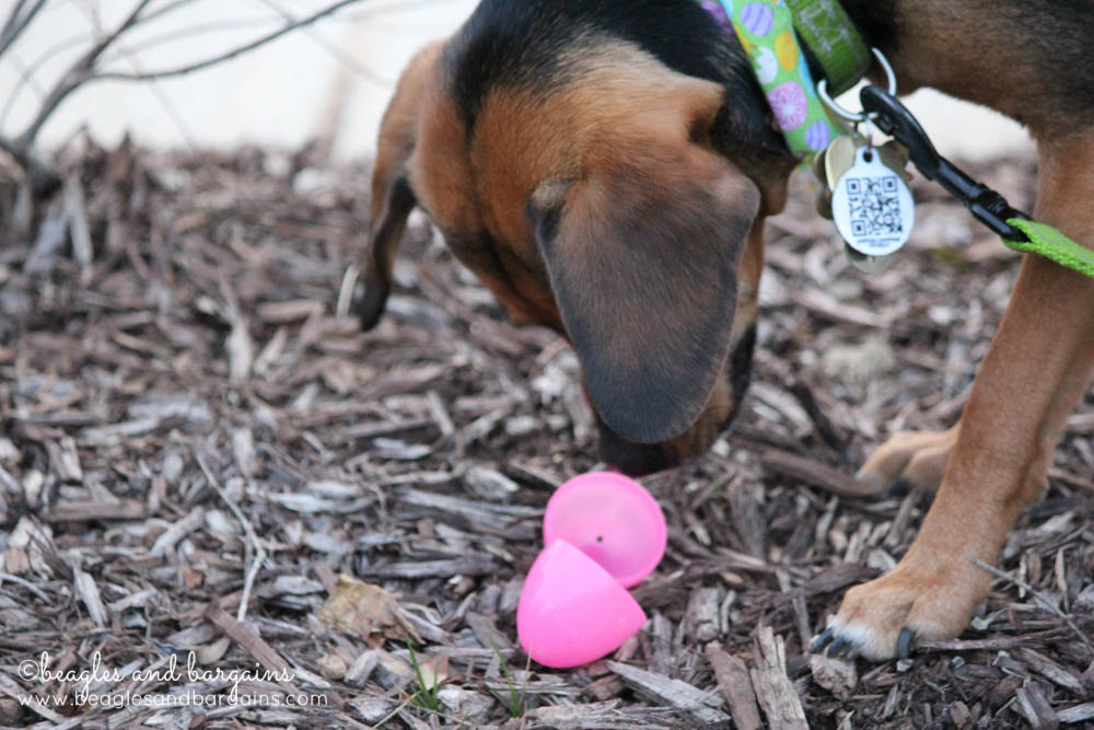 Can Luna find all the eggs in the Easter Egg Hunt for dogs?