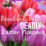 Beautiful, But Deadly Easter Flowers for Dogs and Cats