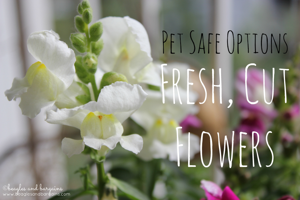 Pet Safe Options for Fresh, Cut Flowers