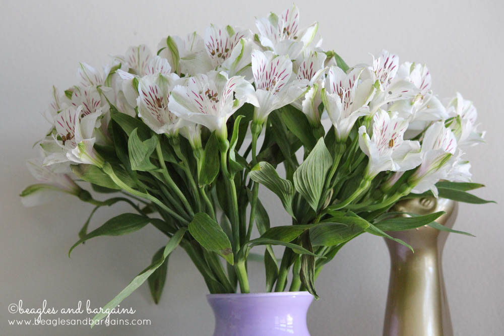 Alstroemeria are great Dog Safe Options for Fresh, Cut Flowers. Avoid for Cats.