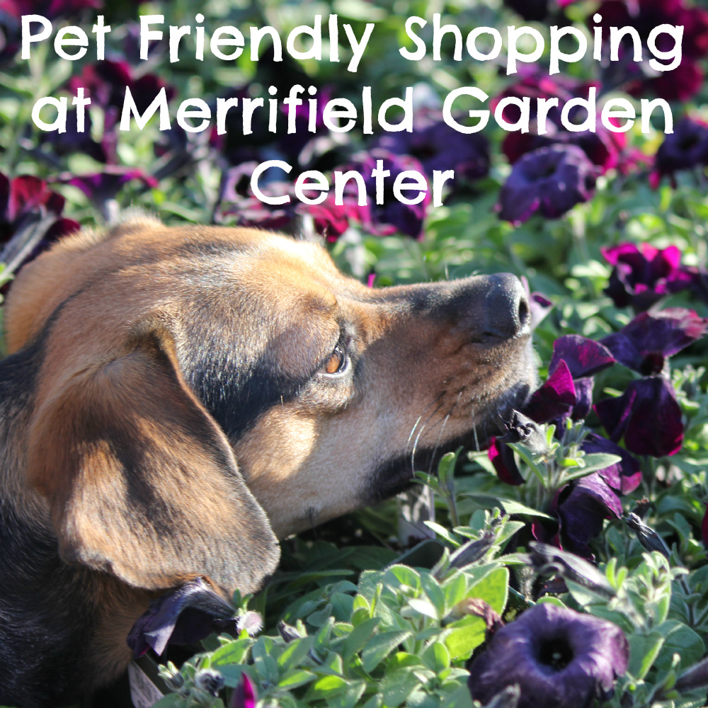 Pet Friendly Shopping at Merrifield Garden Center.