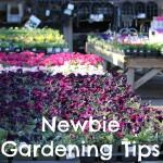Newbie Gardening Tips for Pet Safe Gardens