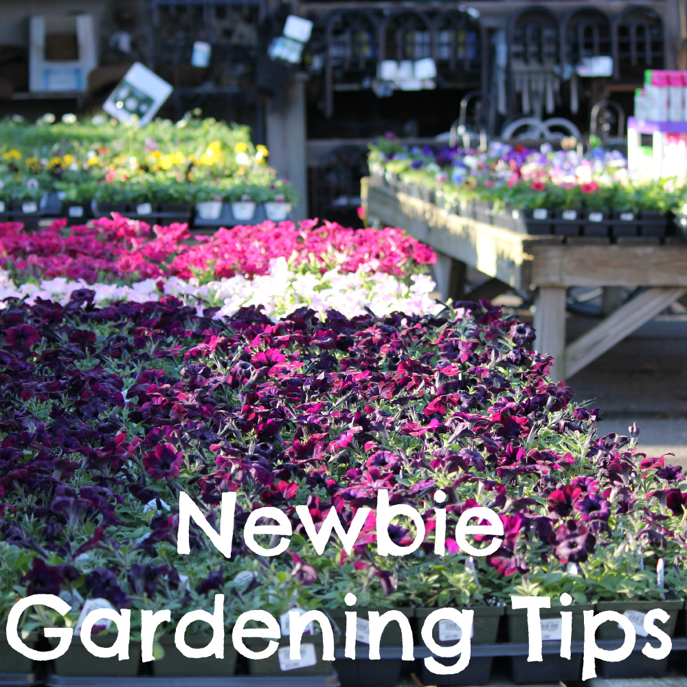 Newbie Gardening Tips