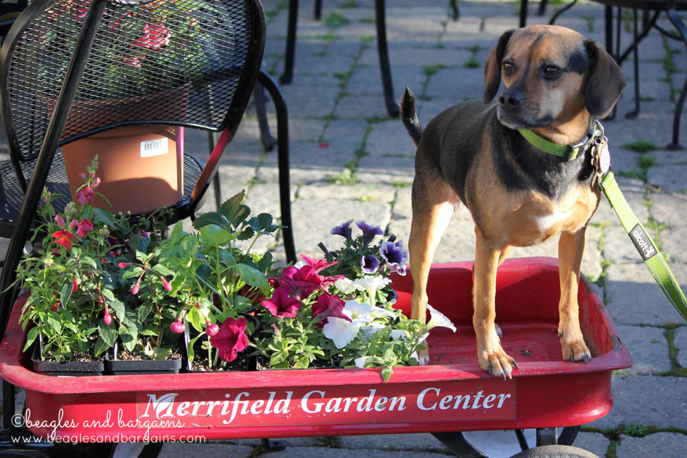 Merrifield Garden Center is a dog friendly shopping destination in Northern Virginia.