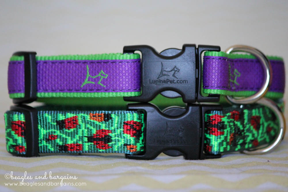 Lupine Original Designer Patterned and CLUB Dog Collars