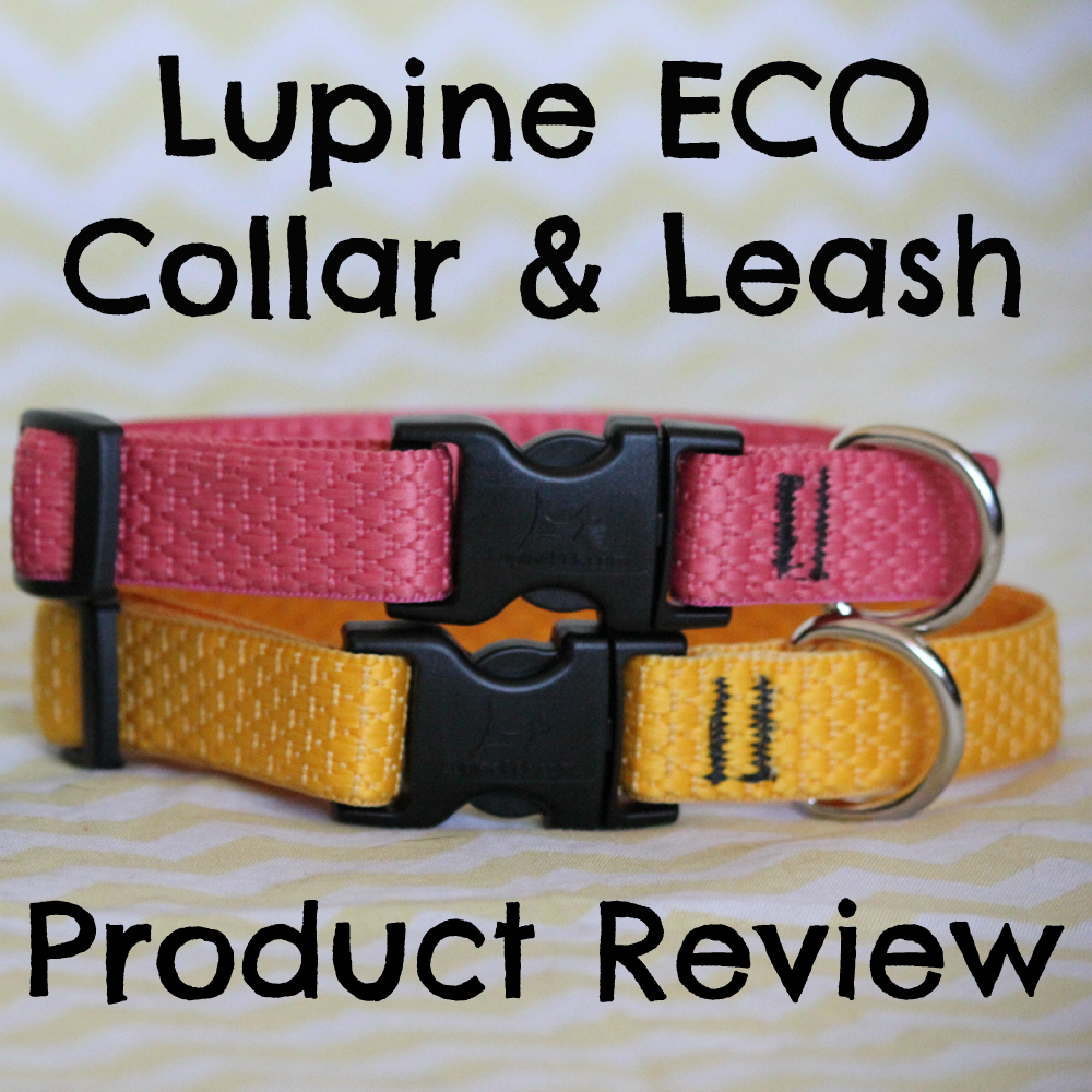 Lupine ECO Collar and Leash Product Review