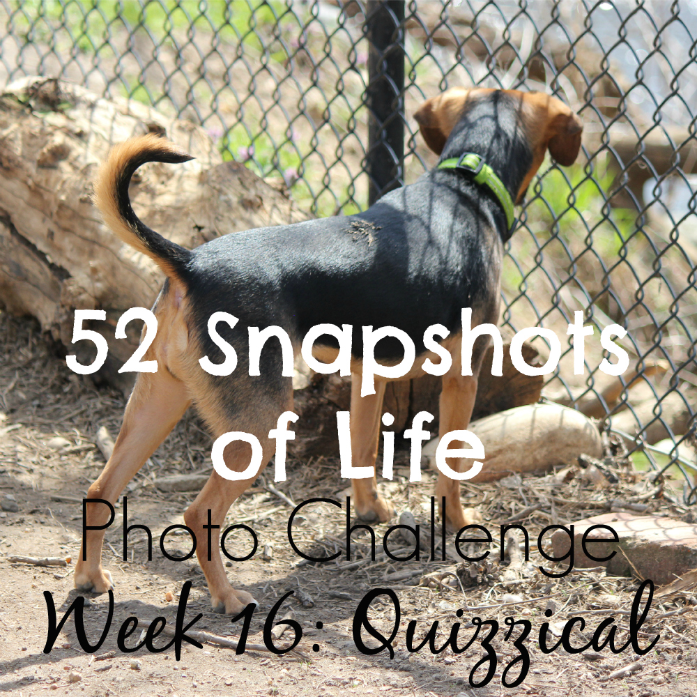 52 Snapshots of Life - Photo Challenge - Week 16: QUIZZICAL