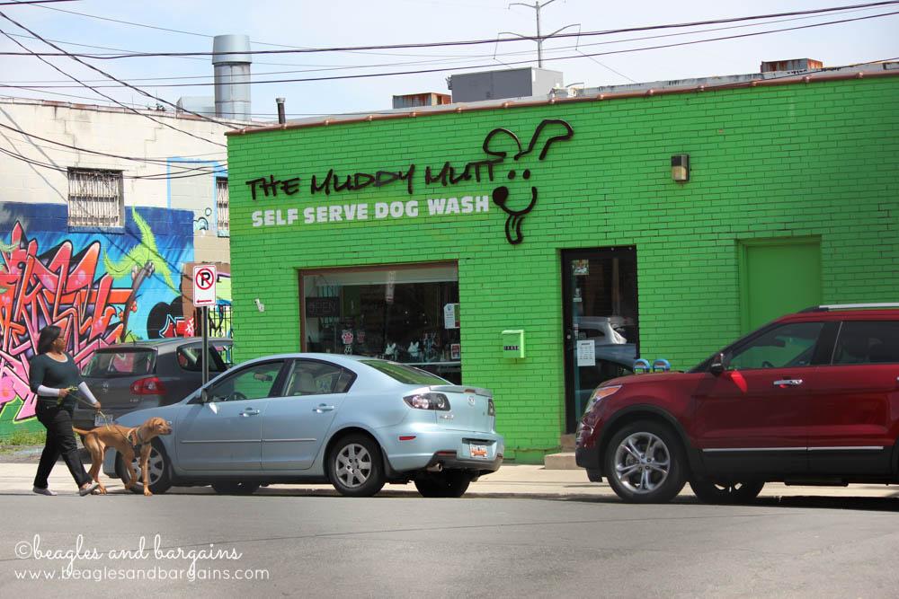 Dog wash store nearby Shirlington Dog Park