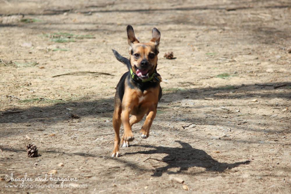 Luna has a blast at Shirlington Dog Park