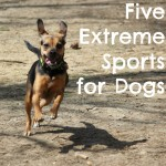 Extreme Sports for Dogs