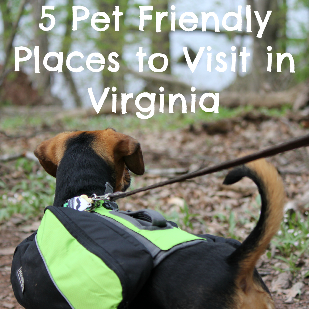 5 Pet Friendly Places to Visit in Virginia