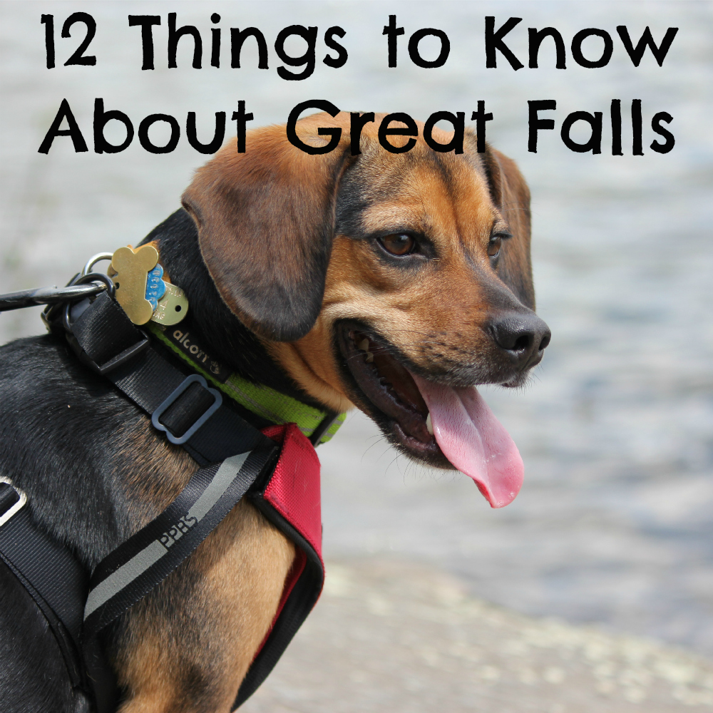 12 Things to Know Before Visiting Great Falls National Park