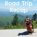 Many Smells From Different Places – Road Trip Recap