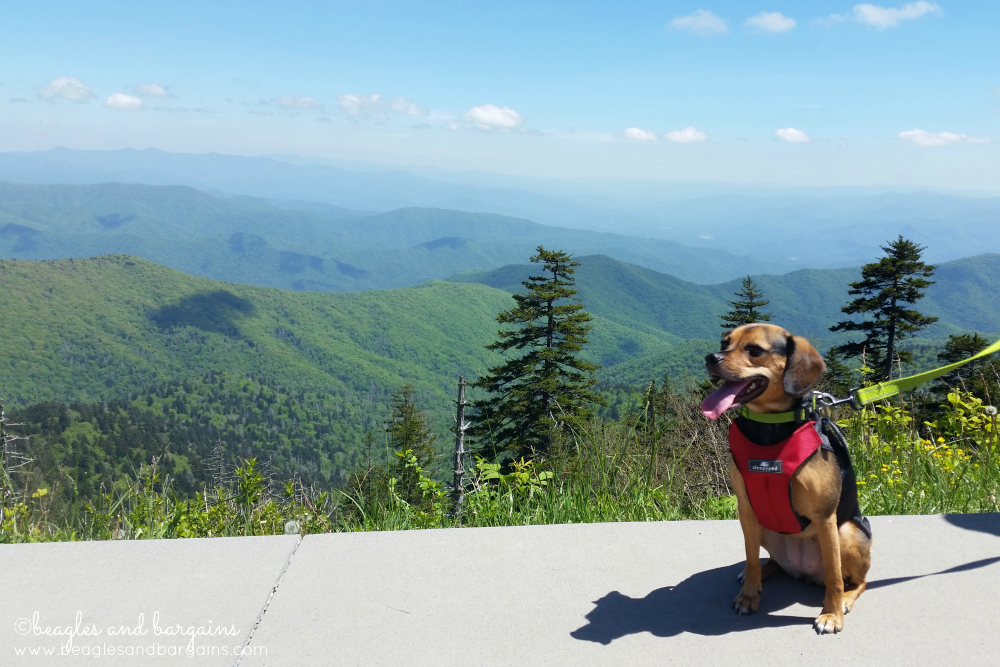 Luna in the Great Smoky Mountains