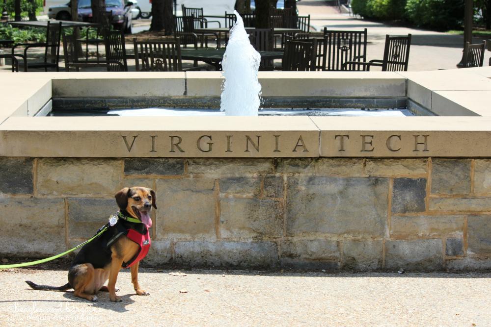 Luna at Virginia Tech