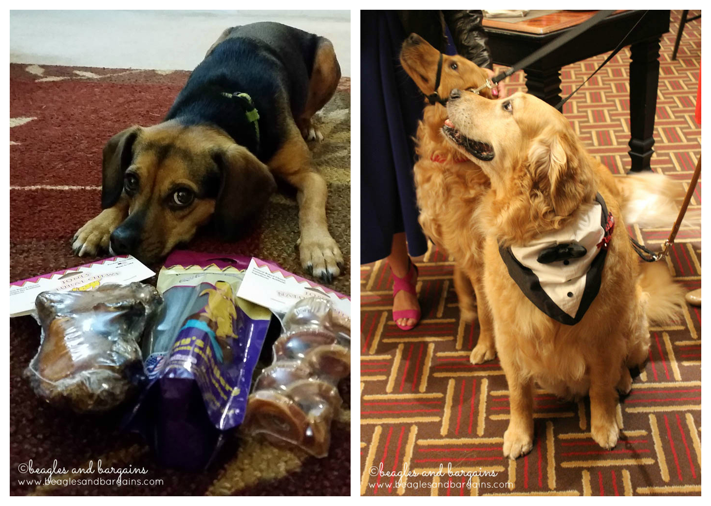 Our friends, Harley and Charlie, from My Dog Likes gifted Luna some yummy Jones Natural Chews!