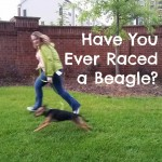 Have You Ever Raced a Beagle?