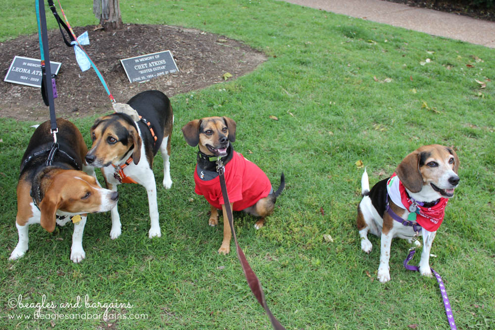 This is the result when you try to photograph four hounds at once!