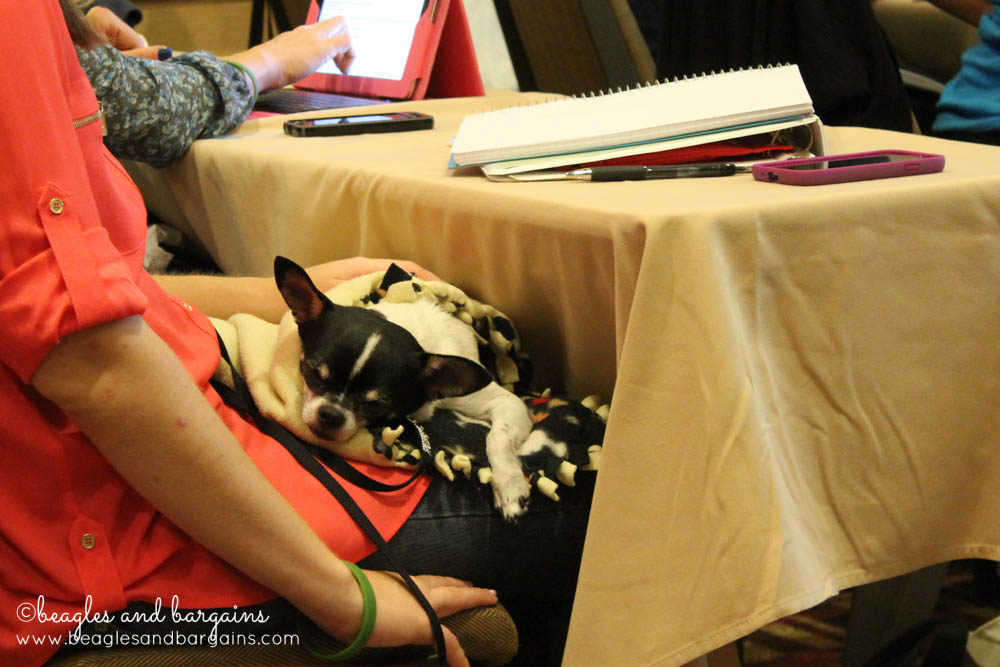 We spied on some fellow bloggers like Wynston from Dog Mom Days during helpful sessions.