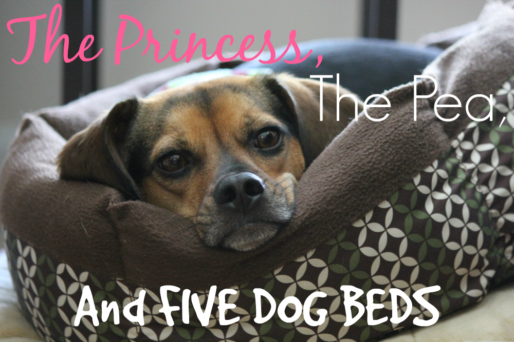 The Princess, The Pea, and FIVE Dog Beds