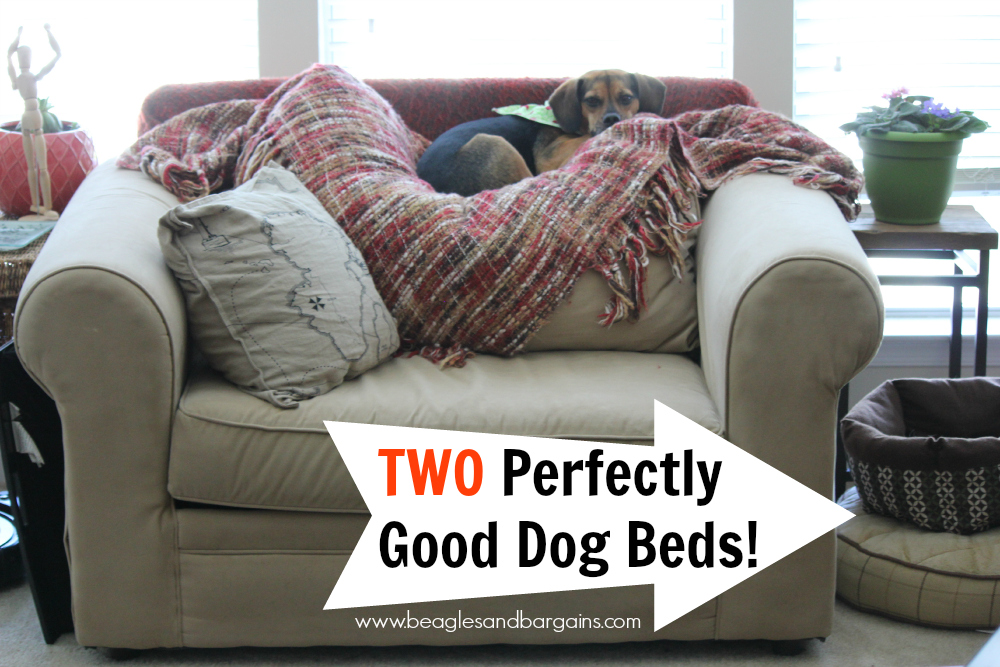 Two perfectly good dog beds lay empty.