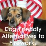 5 Dog Friendly Alternatives to Fireworks this Fourth of July